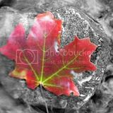 redleafonrockinsteam250x250.jpg image by Featured_Page